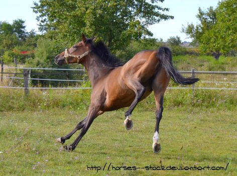 Justification - Stock 11 by Horses--Stock