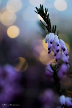 Bokeh 1 by EdibleShoes