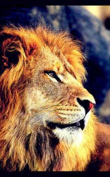 Lion by Renjir0
