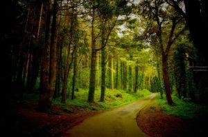 Woods2 by P3droD