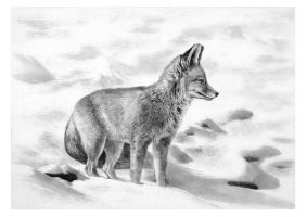indian fox by vijayshrimali-art