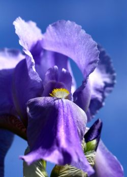 a touch of puple against a blue sky... by clochartist-photo