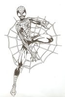 Spidey on web by ParisAlleyne