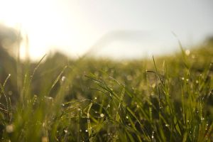 STOCK: morning dew on grass by airetosE