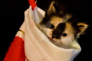 Merry Christmas Kitten by Nebey