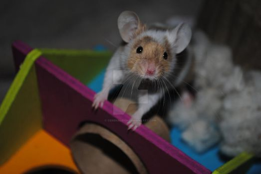 Oliver the Miracle Mouse by CerenaLeigh