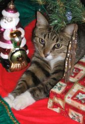 Christmas Kitty by dhlawrence1985