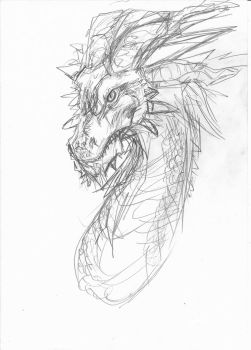 Dragon Sketch by Lucifielle