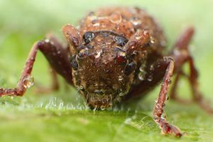 Macro-Beetle01 by RichardjJones