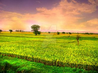 The Fields - HDR by Mawaz