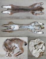 (sold) bobcat pelt by flayote