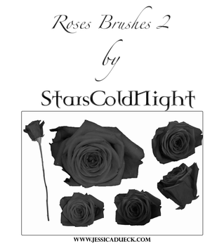 Roses Brushes 2 By Starscoldnight by StarsColdNight