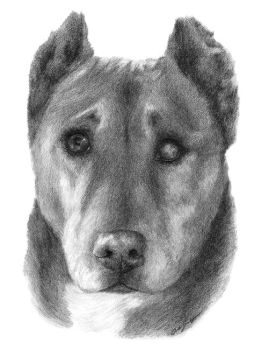 Reba the one eyed  rescue dog by AGillustration