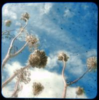 Nature TTV 2 by smithmar01