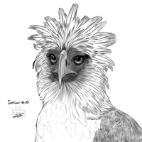 Inktober 15 : philippine eagle by Lily-Fu