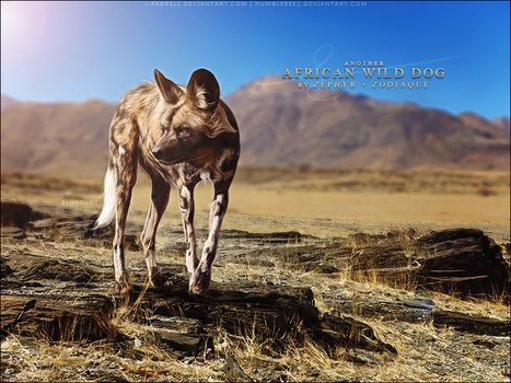 African Wild Dog by Zephyr and Zodiaque by xxELUHFUNT