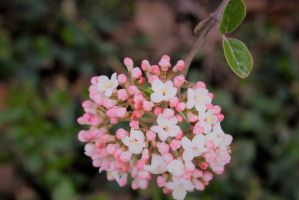 Blossoms 2 by Lily-Azariel-Shade