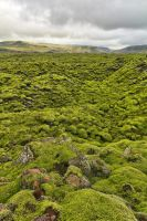 Rugged Green Moss of Iceland by somadjinn