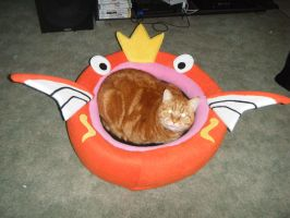 Cat in Magikarp bed by spookysculpter