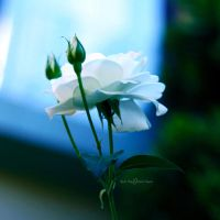 At my Window by WhiteBook
