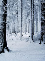 Snow Forest by MDFS by Mrs-Dani-Filth-Stock