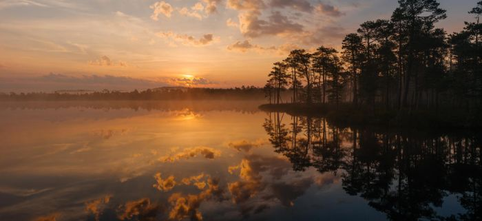 bog lake during sunrise by dzorma