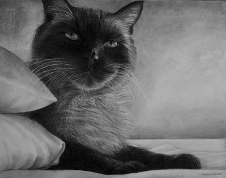 Drawing of Giddy Cat by ladyalita