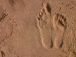 Evidence of Lifeforms on Sand by PATotkaca