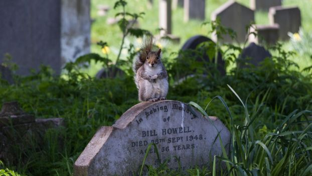 Squirrel on a tomb by Elthaniel