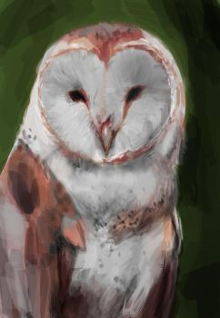 Barn owl speedpaint by fallout161