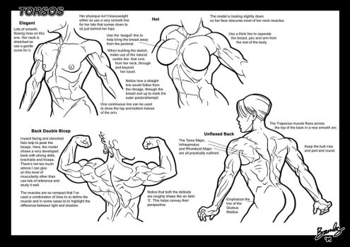 Tutorial: Torsos 1 by Bambs79