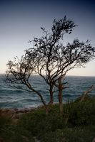 Tree by sea by kymw