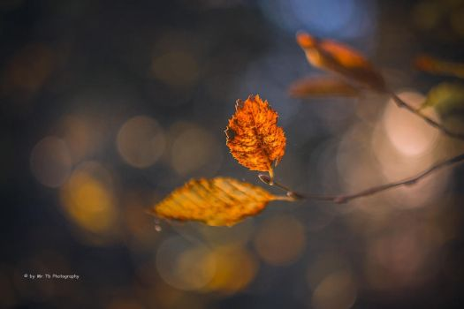 Autumn Leaf (II) by Tb--Photography