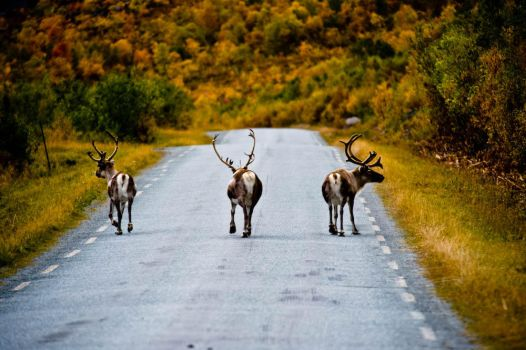 three stooges by Utilikiltarian