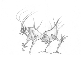 Insect by Volatilite
