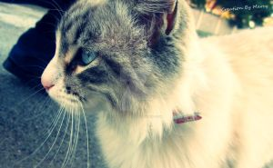 Cat with Blue Eyes by Marcyella86