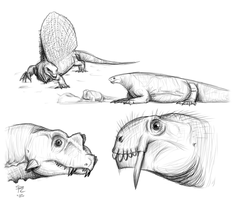 Permian Synapsids by DrawingDinosaurs
