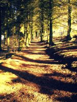 Clatto wood by Scrumpled-Wishes