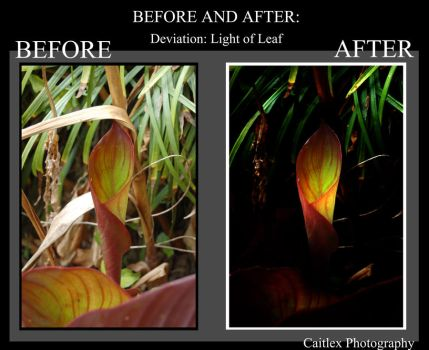 Before and After: Light of Leaf by Caitlex