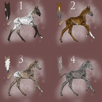 Foal Designs for sale by EndingStories