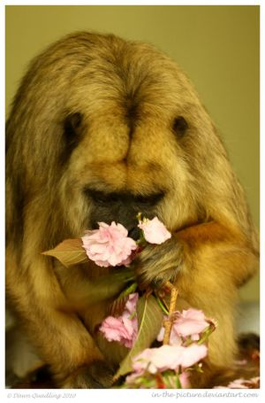 Time To Smell the Flowers by In-the-picture
