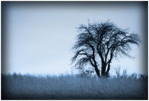 The Whispering Tree by Zinnia-Aster