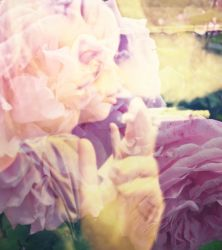 Smoke and Roses by VINpixPhotography
