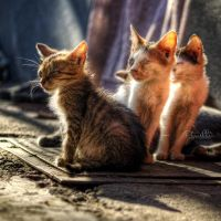 Fellowship of the ruins (introduction) by Piroshki-Photography