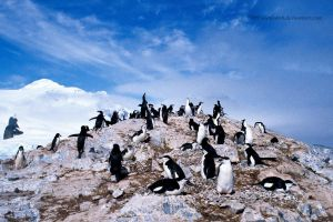 Antarctic Ecstasy - Penguins by stubirdnb
