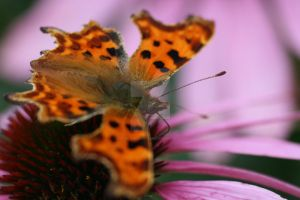 Comma by Gothic-Enchantress