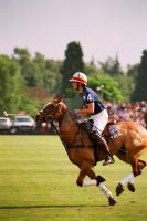 Polo by JamesElliot
