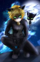 Cat Noir by Animentro