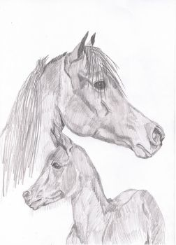 Mare and foal by missipepper