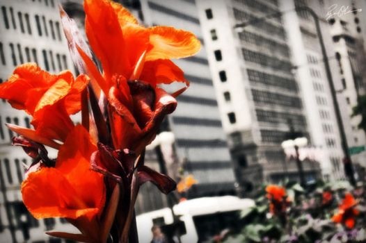 City Flowers Three by rekit